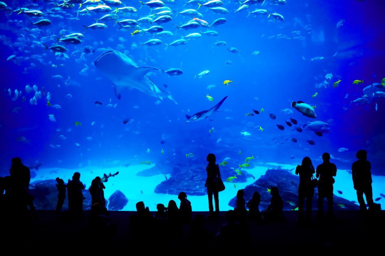 Water, Vertebrate, Blue, Organism, Underwater, World, Fish, Entertainment