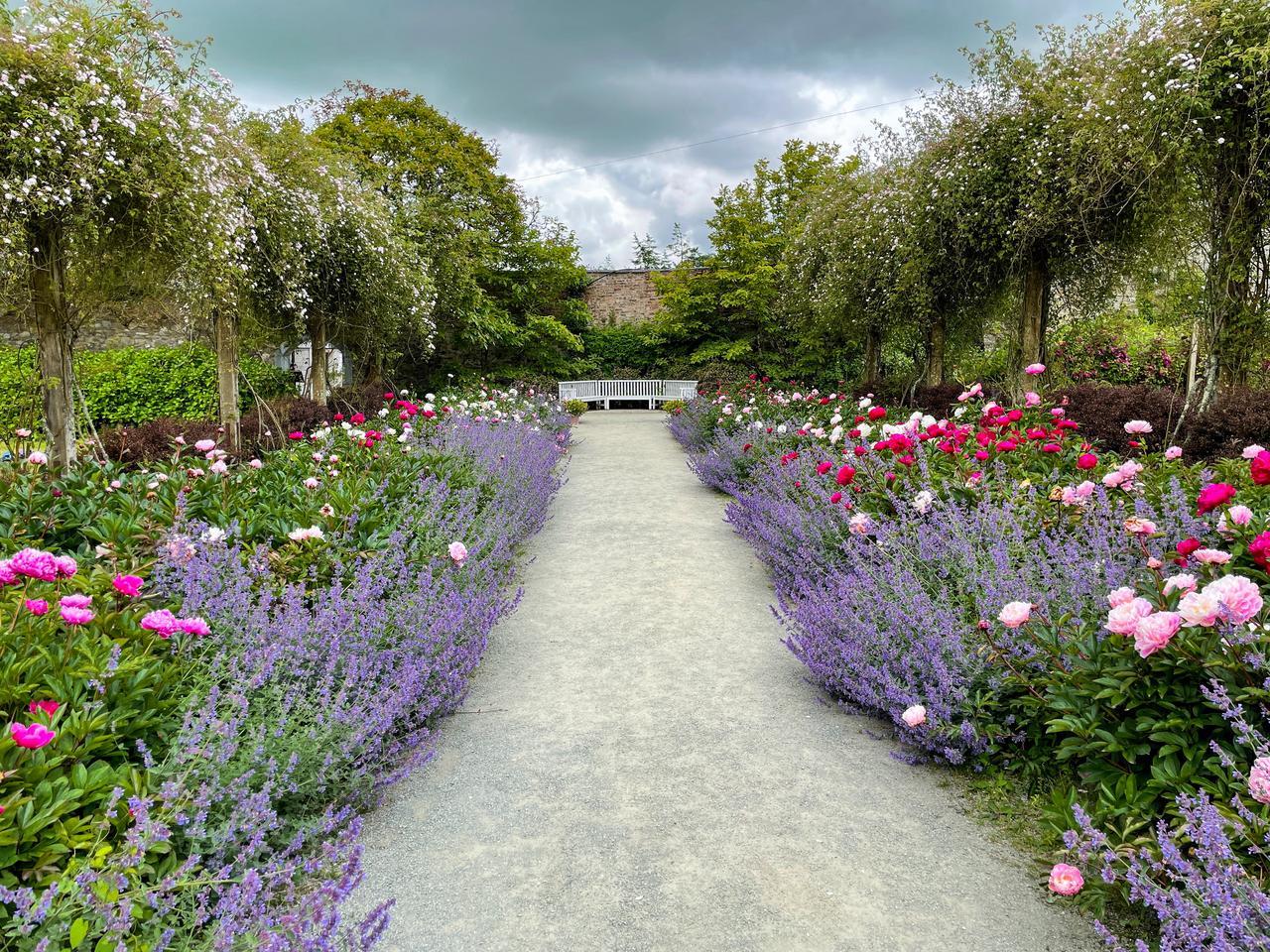 Plant community, Flower, Cloud, Sky, Tree, Petal, Vegetation, Hedge, Grass
