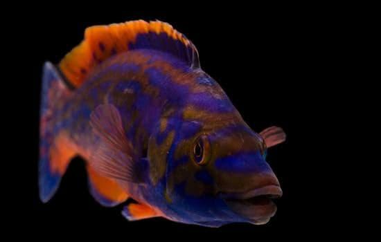 Fish supply, Underwater, Fin