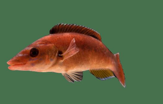 Marine biology, Fin, Underwater, Fish