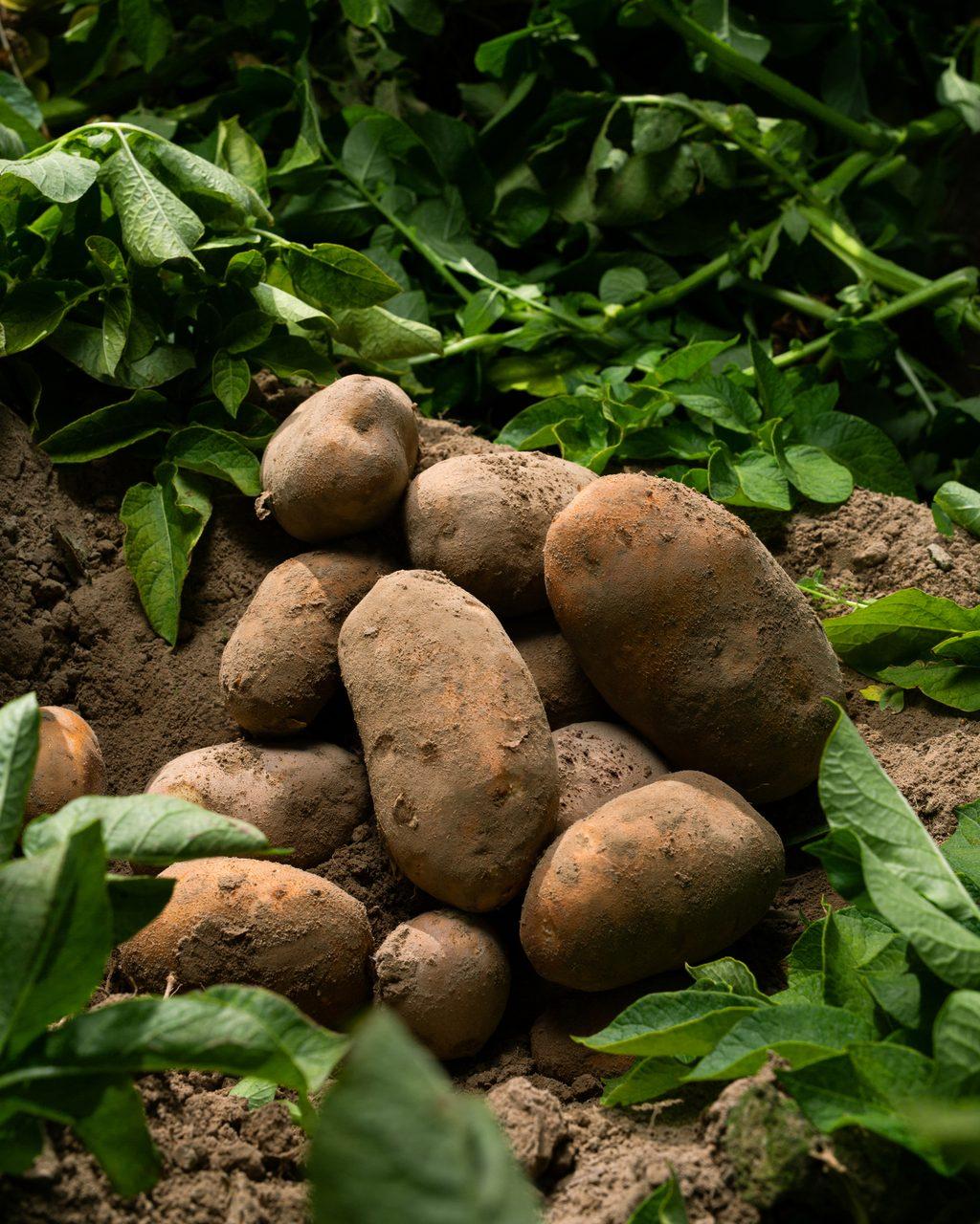 Plant community, Natural foods, Food, Tuber, Grass