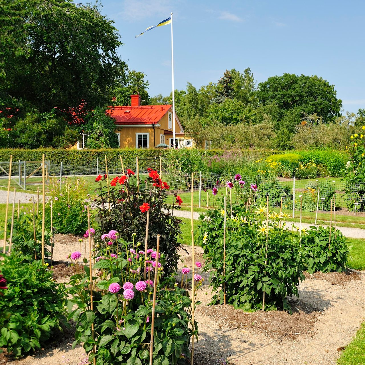 Land lot, Flower, Plant, Sky, Green, Tree, Vegetation, Grass, Shrub, Hedge
