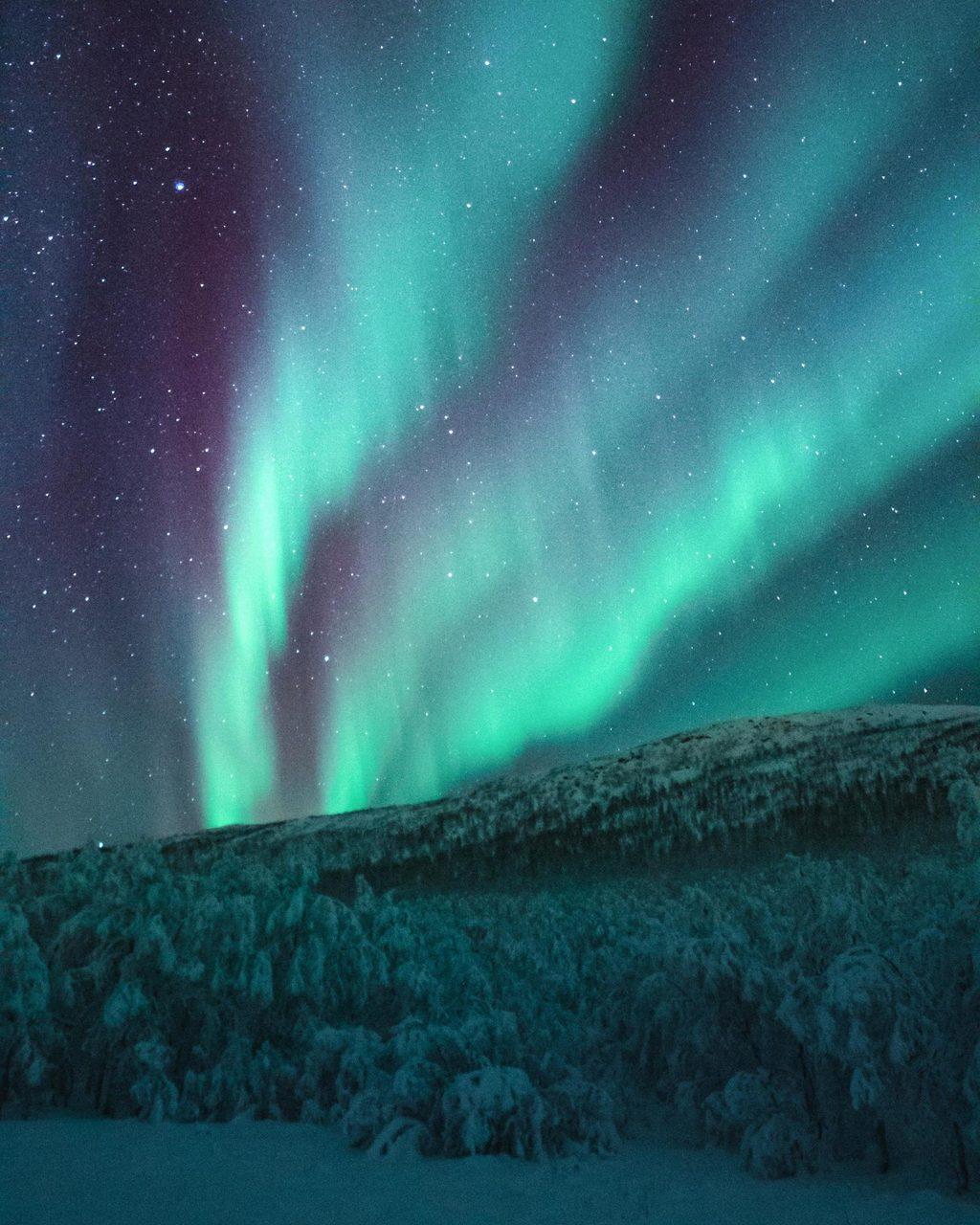 Natural landscape, Atmospheric phenomenon, Astronomical object, Sky, Atmosphere, Aurora, Black, Tree, Horizon