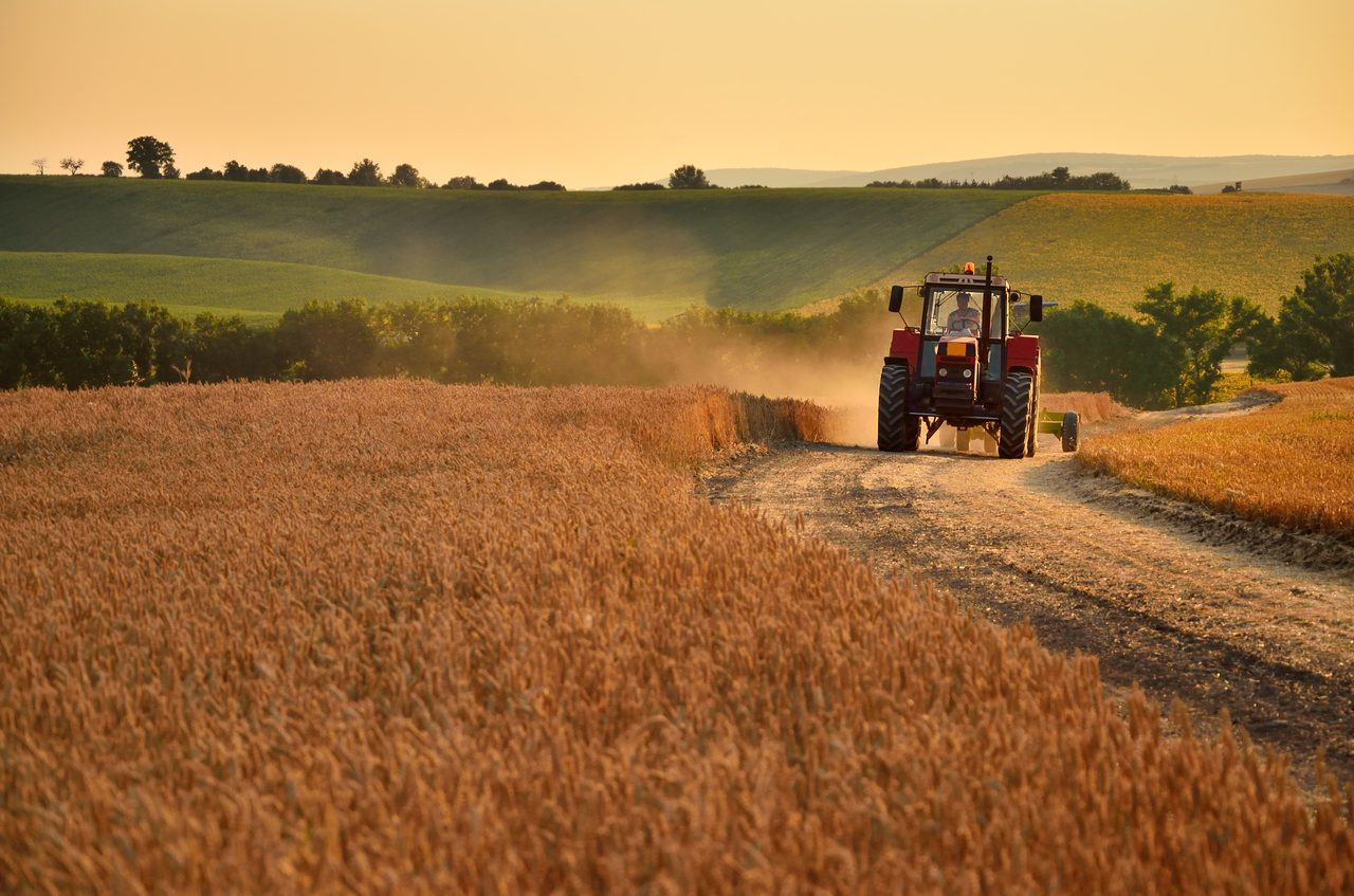 Agricultural machinery, Tire, Plant, Wheel, Vehicle, Tractor, Sky, Harvester, Agriculture, Grass