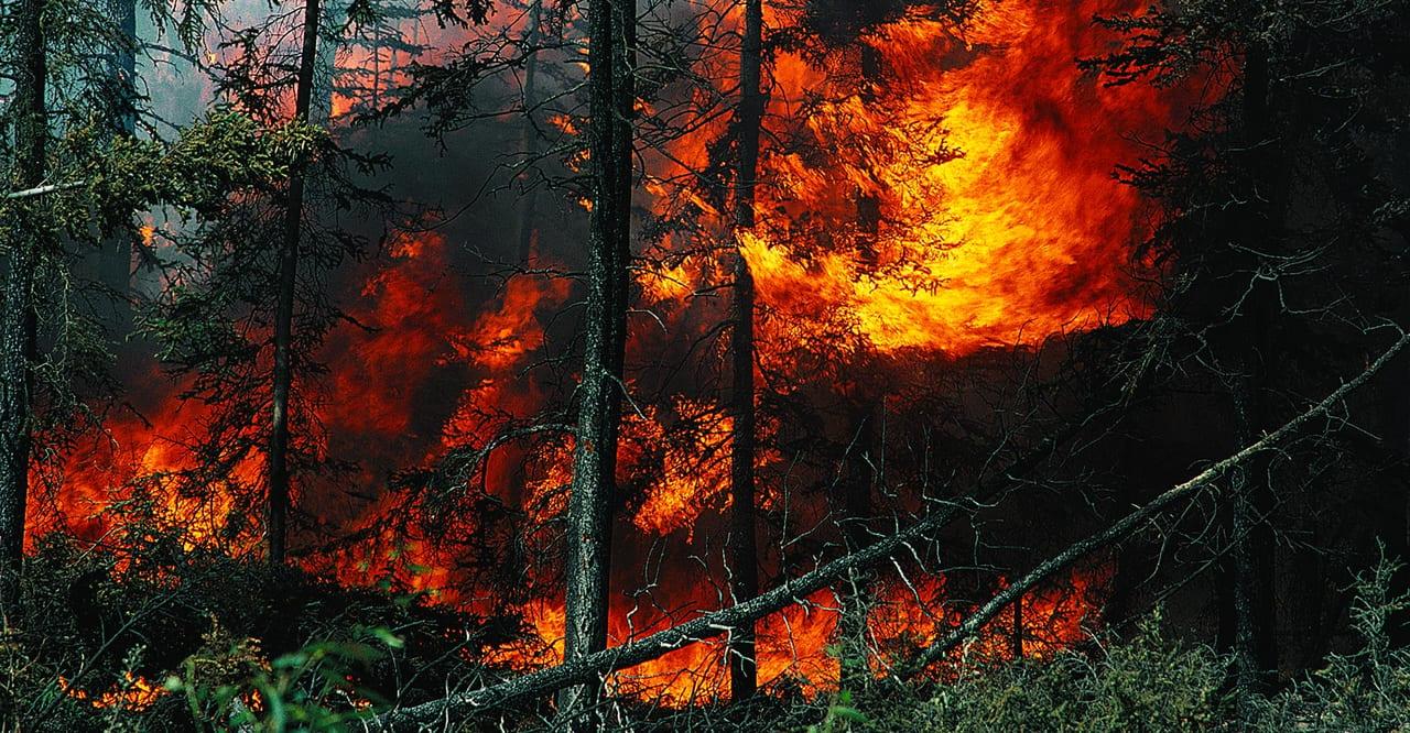Natural landscape, Plant, Ecoregion, Orange, Fire, Wood, Tree, Flame, Sunlight