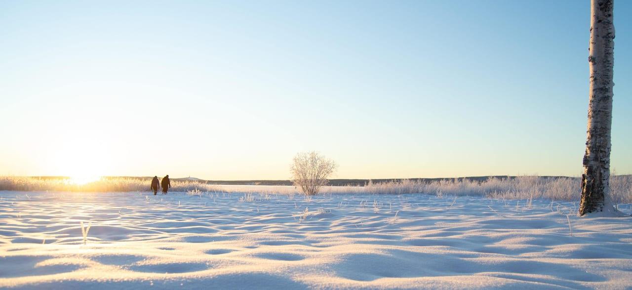 Natural landscape, Sky, Atmosphere, Plant, Ecoregion, Tree, Branch, Snow, Twig, Wood