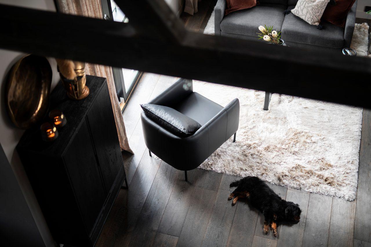 Automotive design, Vehicle door, Dog, Black, Wood, Grey, Floor, Flooring, Wall