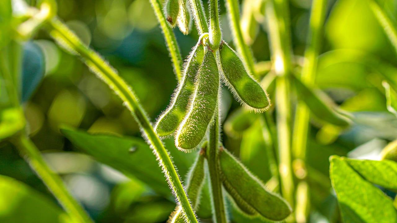 Terrestrial plant, Long pepper, Water, Flower, Tree, Grass