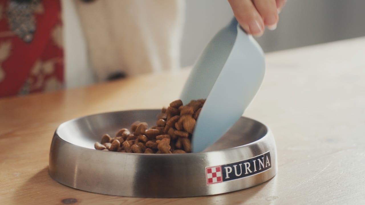 Single-origin coffee, Animal feed, Food, Tableware, Ingredient, Cup, Serveware, Dish, Cuisine