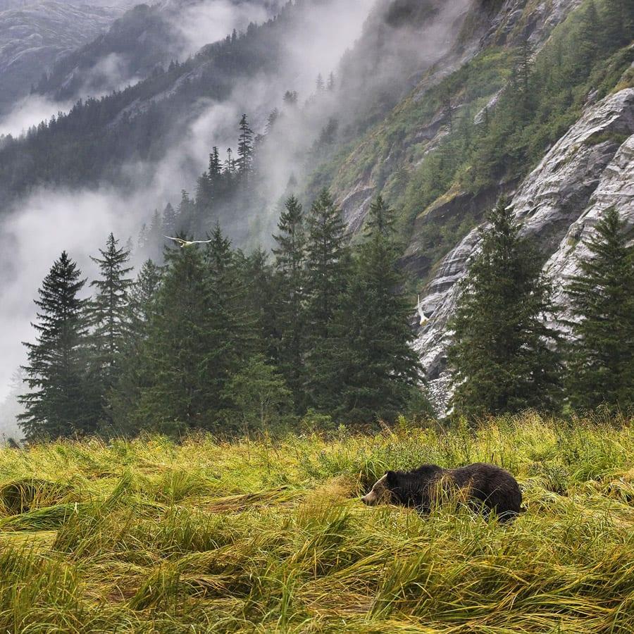 Natural landscape, Plant, Mountain, Cloud, Ecoregion, Tree, Larch, Grass, Fog, Vegetation