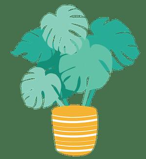 2. Pflanze