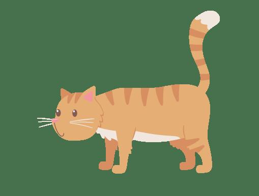 Terrestrial animal, Carnivore, Felidae, Toy, Gesture, Whiskers, Fawn