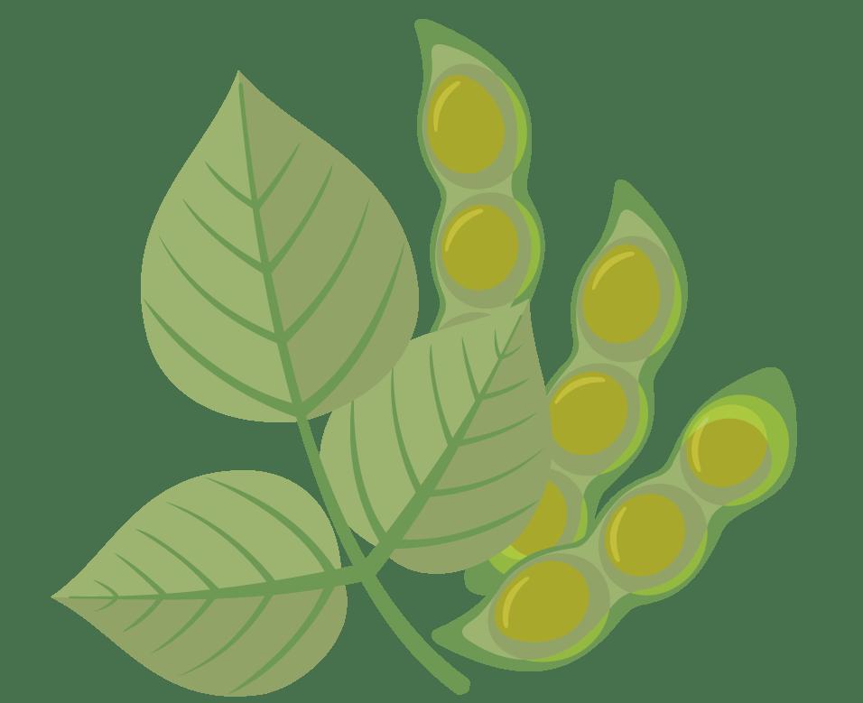 Terrestrial plant, Flower, Tree