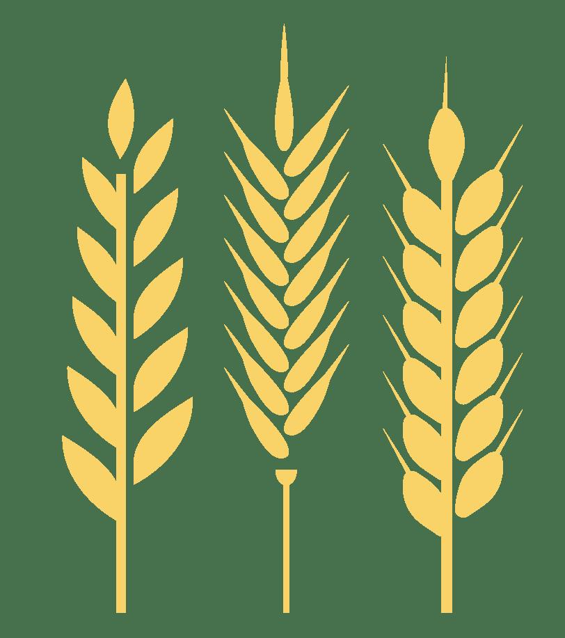 Terrestrial plant, Leaf, Art, Line, Font
