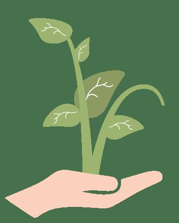 Terrestrial plant, Houseplant, Tree