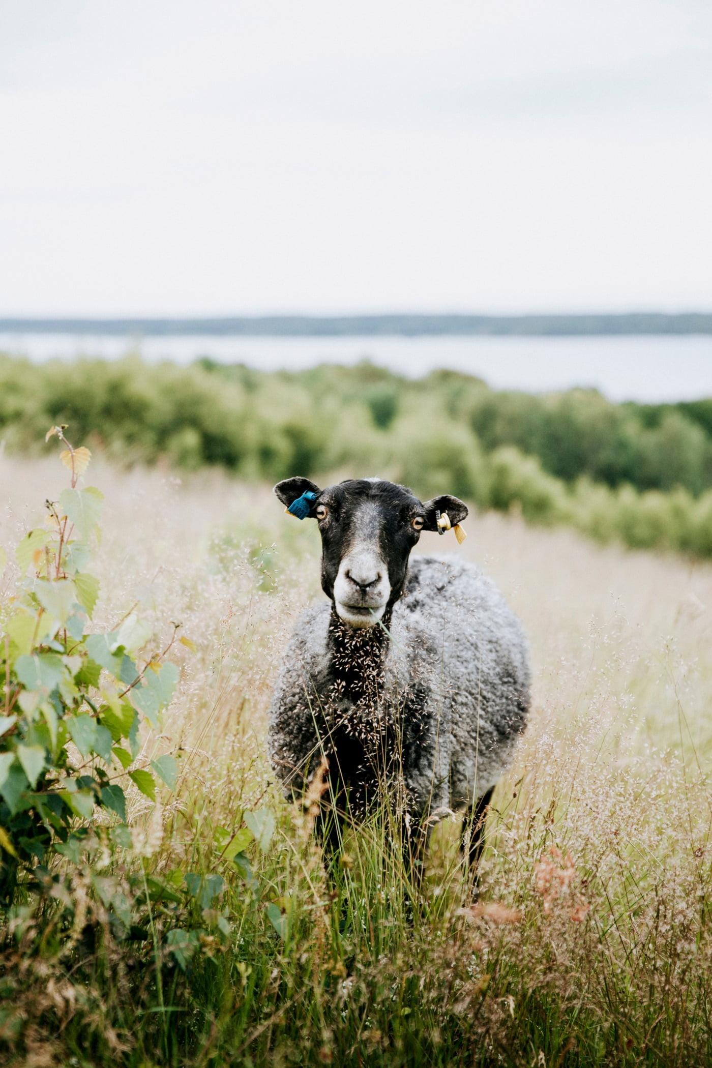 Working animal, Natural landscape, Sky, Plant, Grass