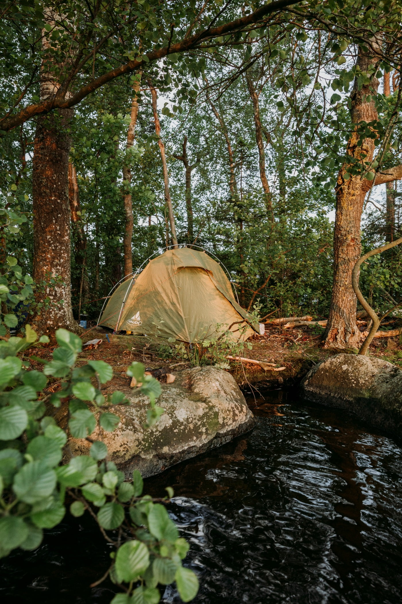 Plant community, Natural landscape, Water, Tree, Wood, Tent, Sunlight, Trunk, Watercourse