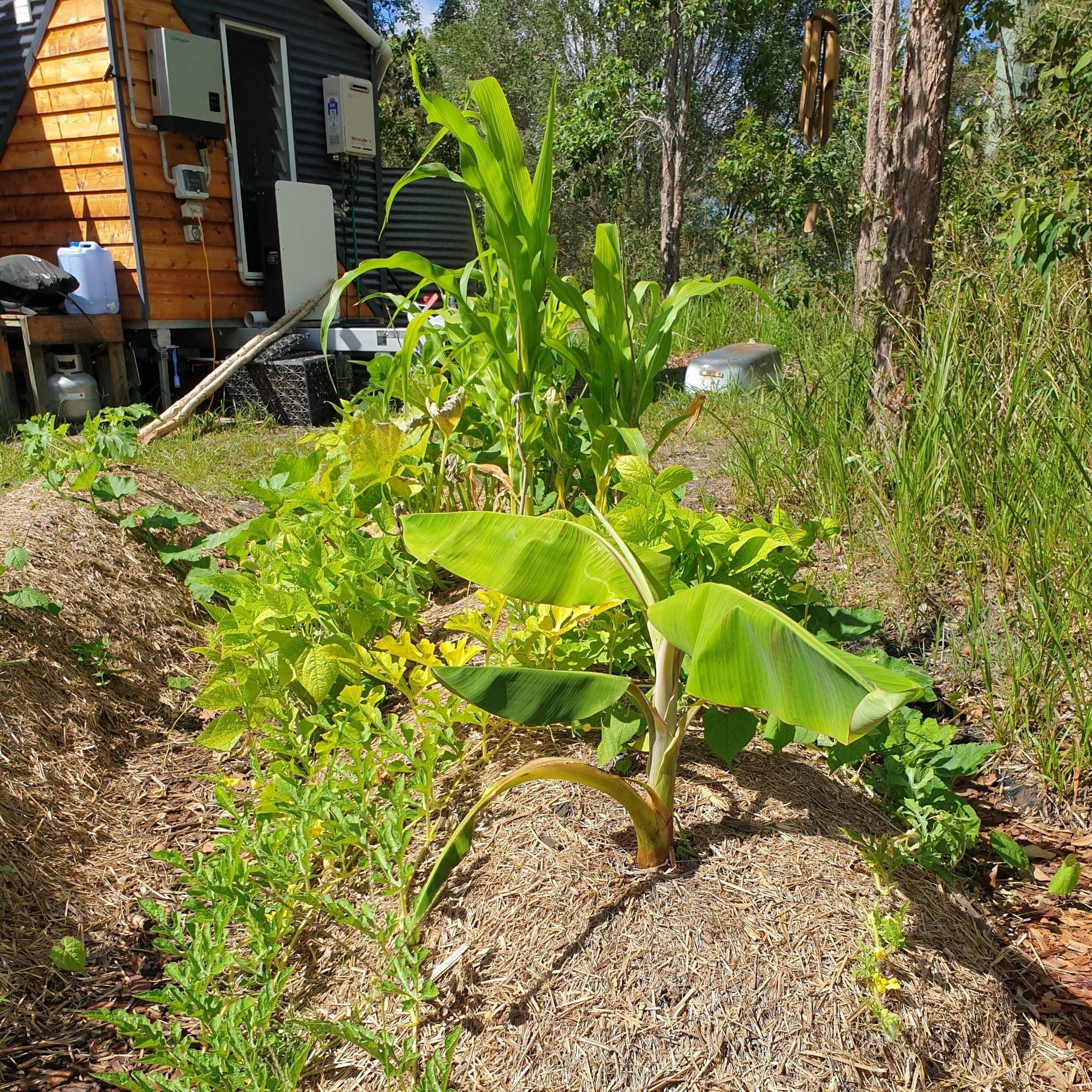 Terrestrial plant, Window, Tree