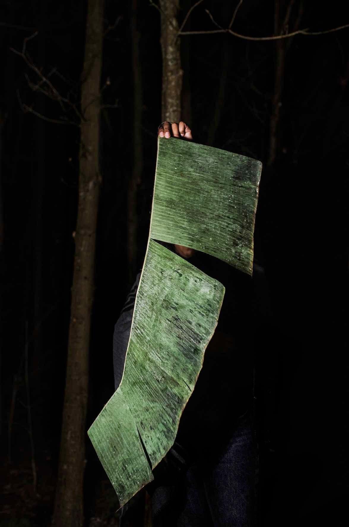 Trunk, Darkness, Leaf, Wood