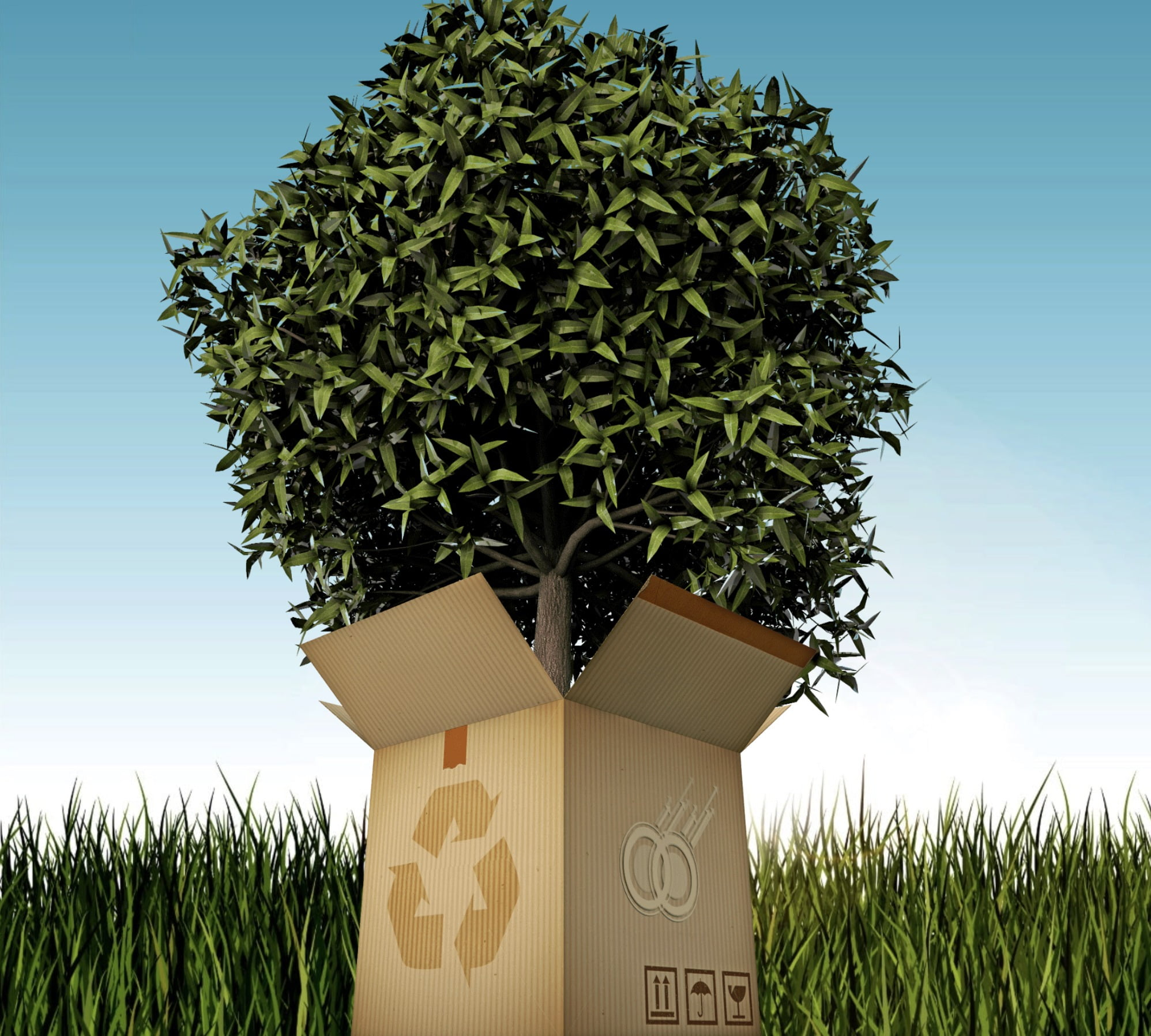 Box with recycling icons and tree growing from inside the box