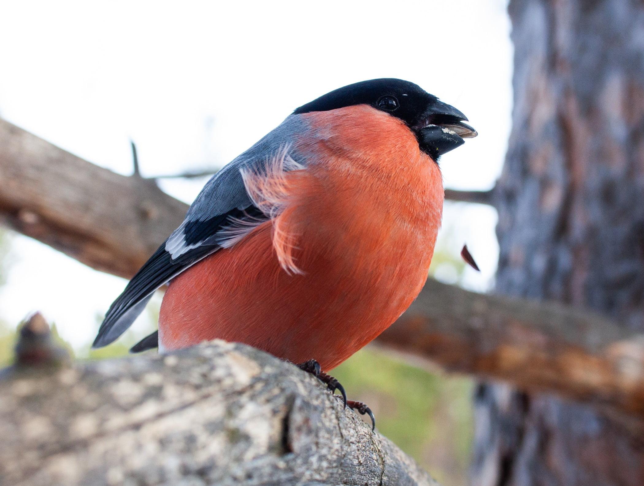 Bird, Beak, Feather, Wood