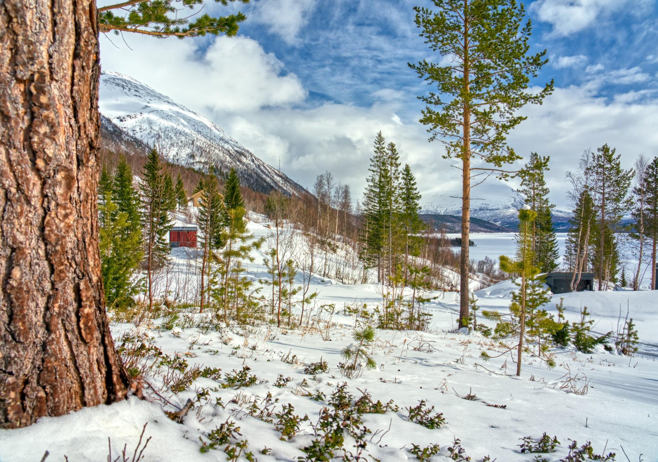 Natural landscape, Cloud, Plant, Sky, Snow, Nature, Larch, Tree, Slope, Wood