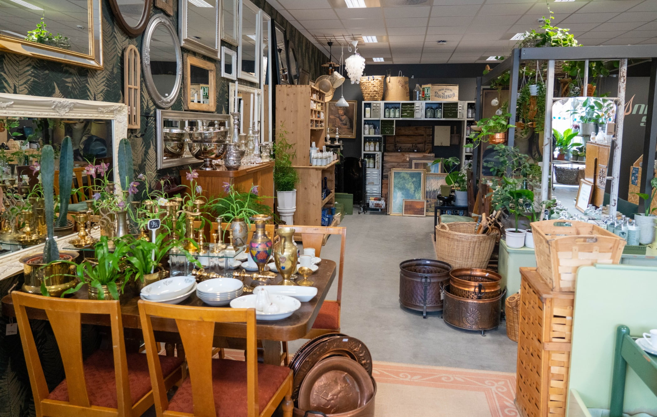 Interior design, Plant, Table, Flowerpot, Building, Tableware, Houseplant, Wood