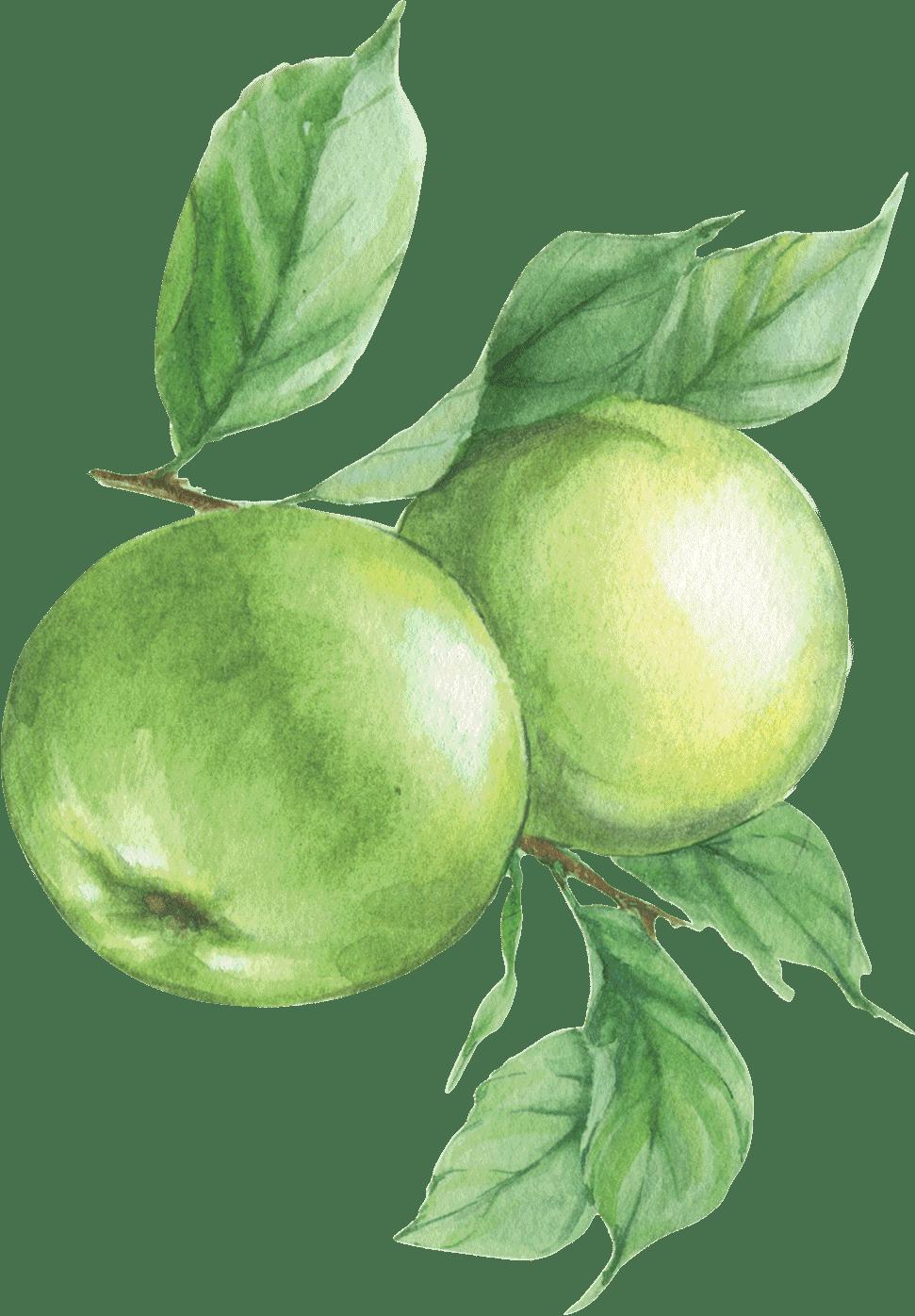 Staple food, Natural foods, Plant, Flower, Fruit, Tree