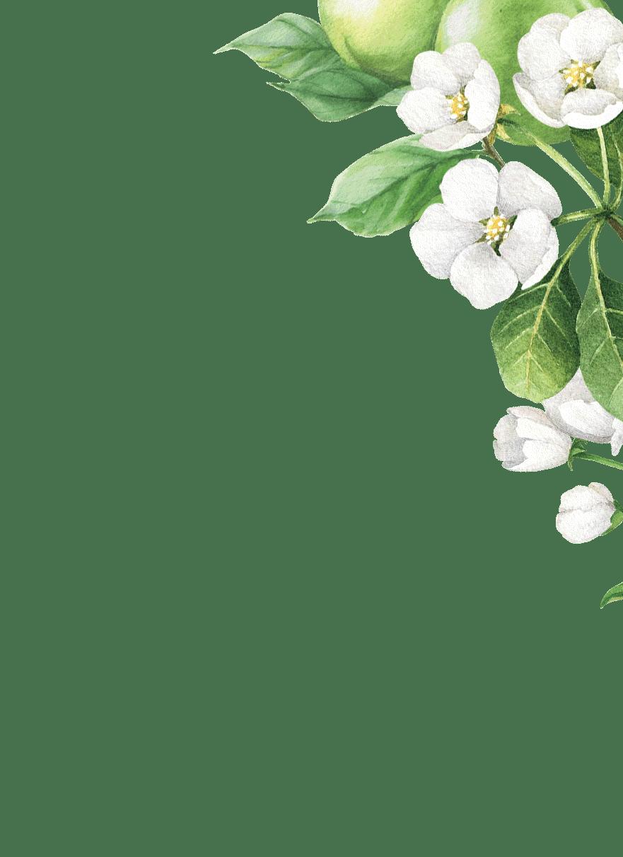 Flower, Petal