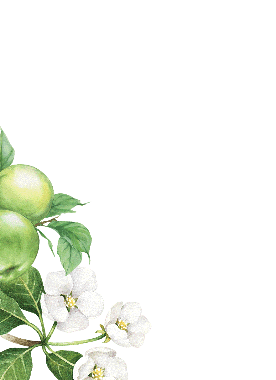 Flower, Plant, Petal, Twig, Art