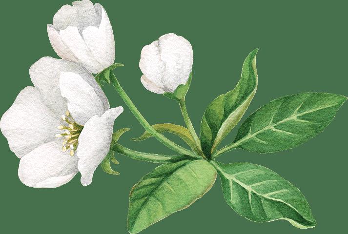 Plant, Flower, Petal