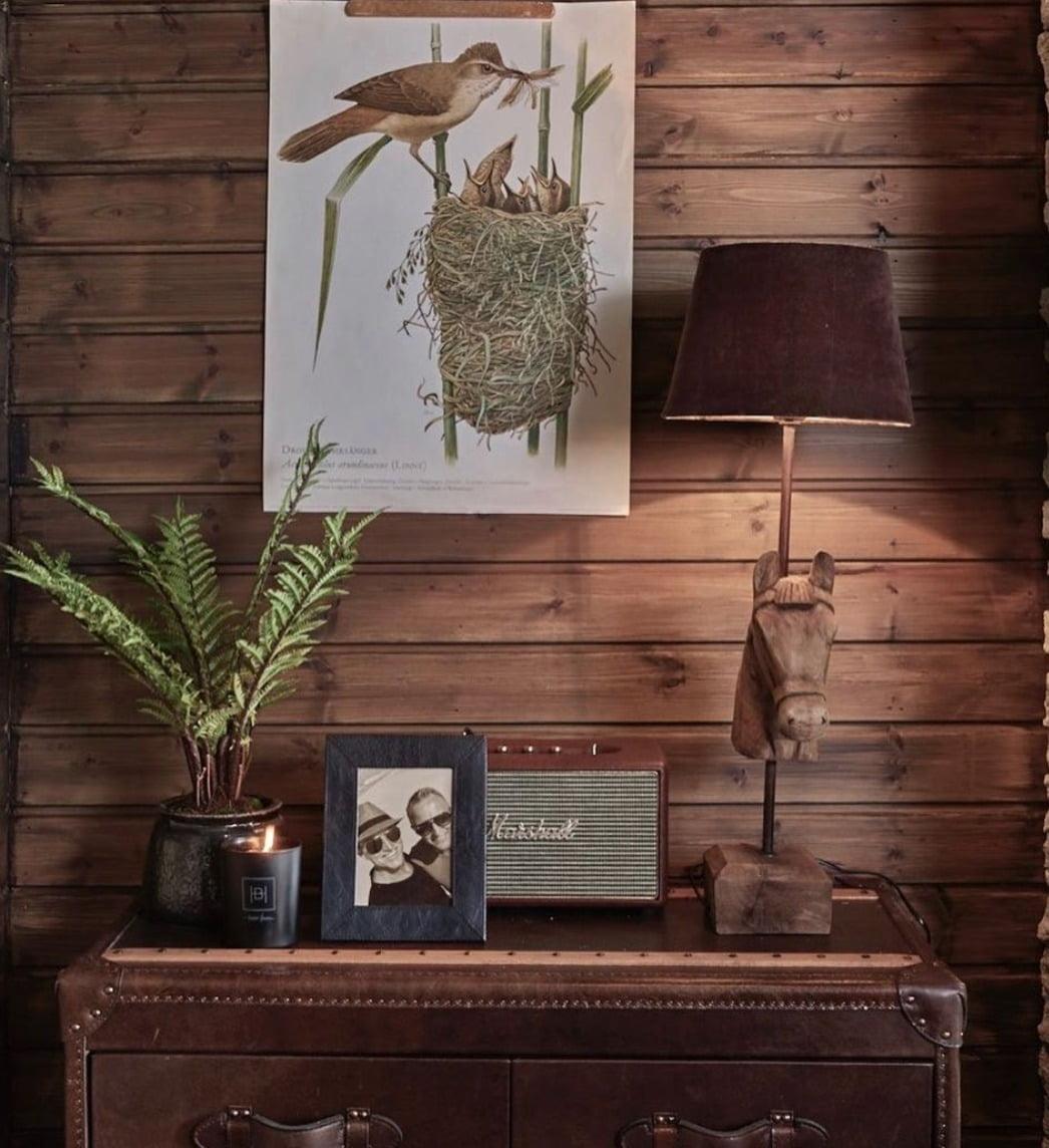Interior design, Brown, Plant, Bird, Wood, Branch, Twig, Flowerpot, Shelving, Houseplant