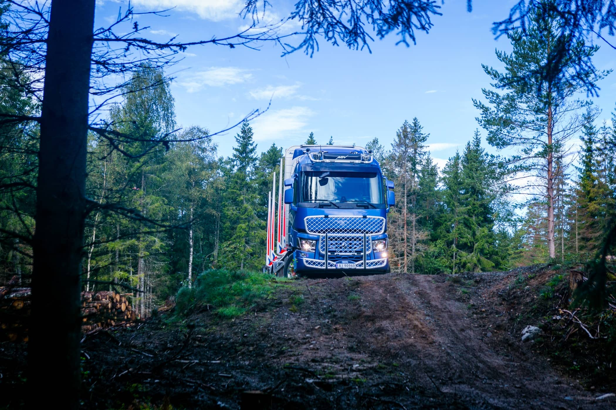 Mode of transport, Commercial vehicle, Natural environment, Wilderness, Forest, Vegetation, Tree