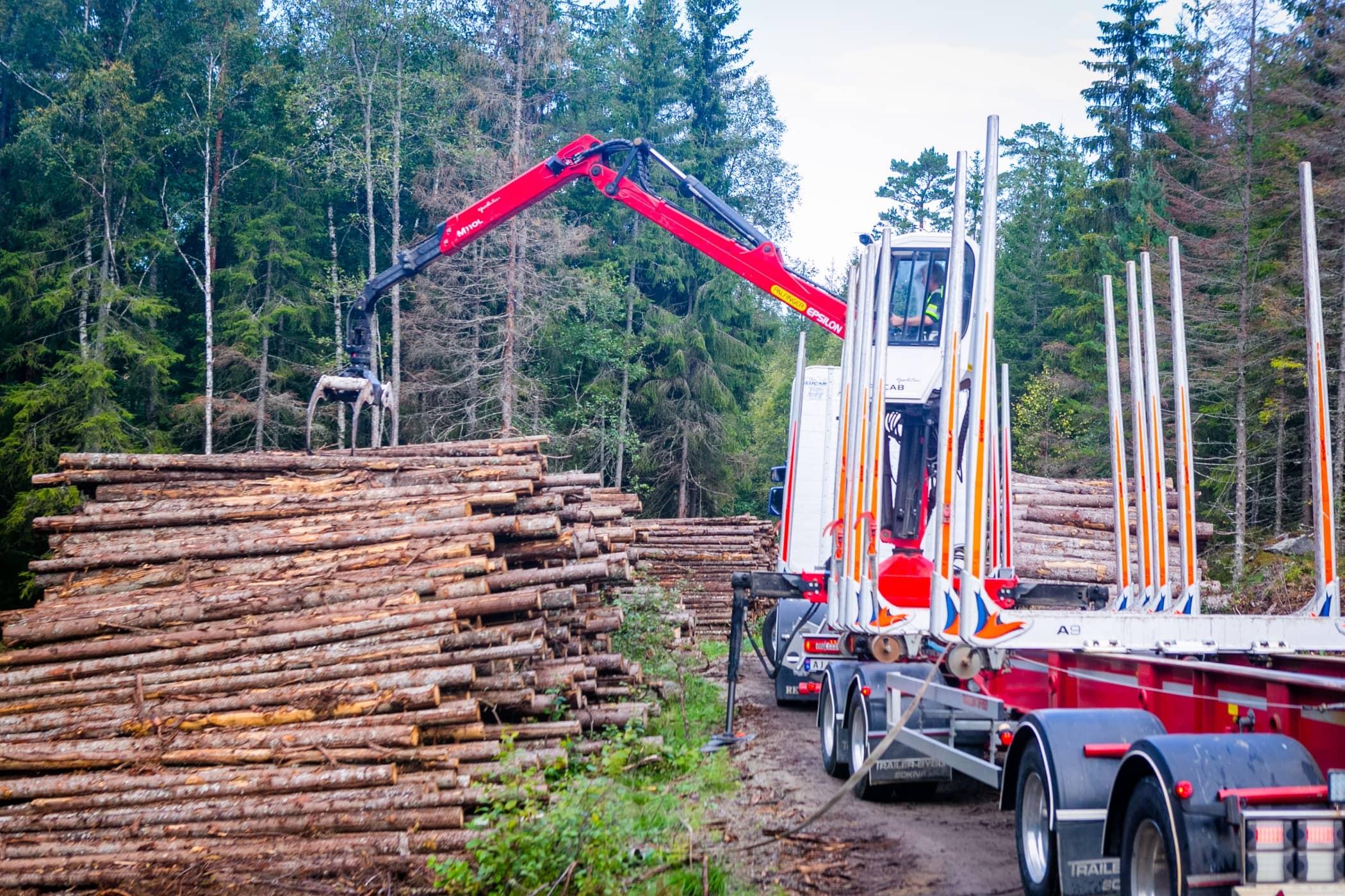 Crane, Wood, Tree, Transport