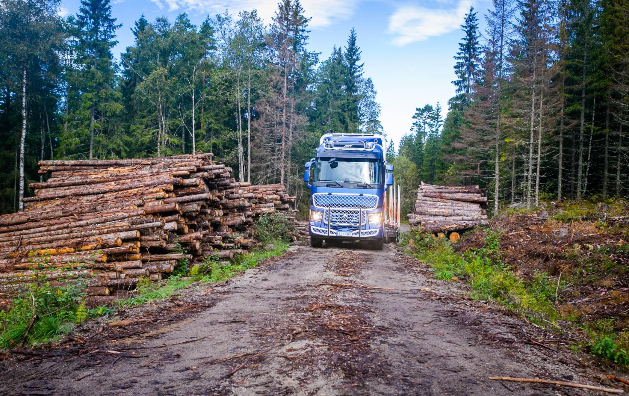 Mode of transport, Natural landscape, Woodland, Vehicle, Wilderness, Tree, Forest