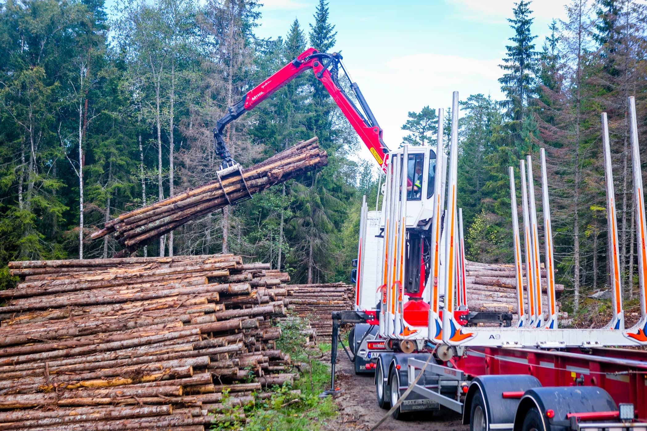 Wood, Construction, Transport, Tree, Crane