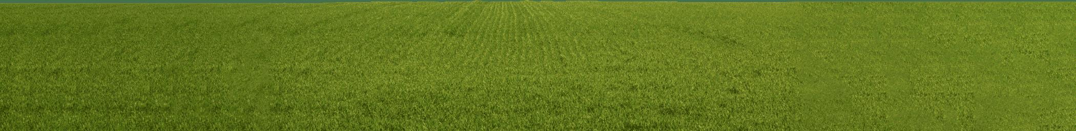 Natural environment, Land lot, Ecoregion, Green, Plant, Rectangle, Grass