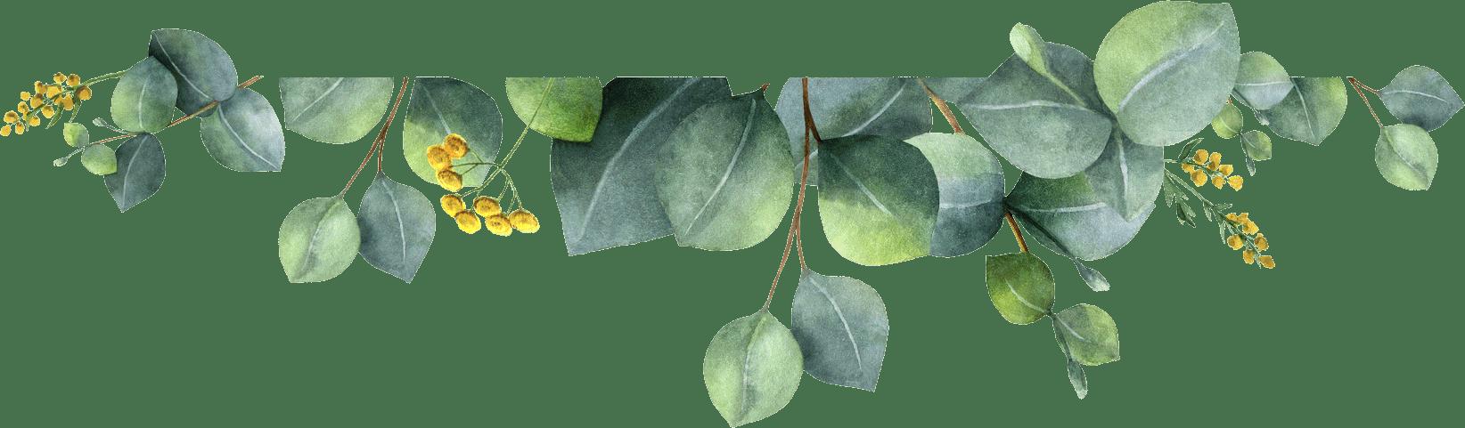 Plant, Flower, Leaf, Branch, Twig, Tree