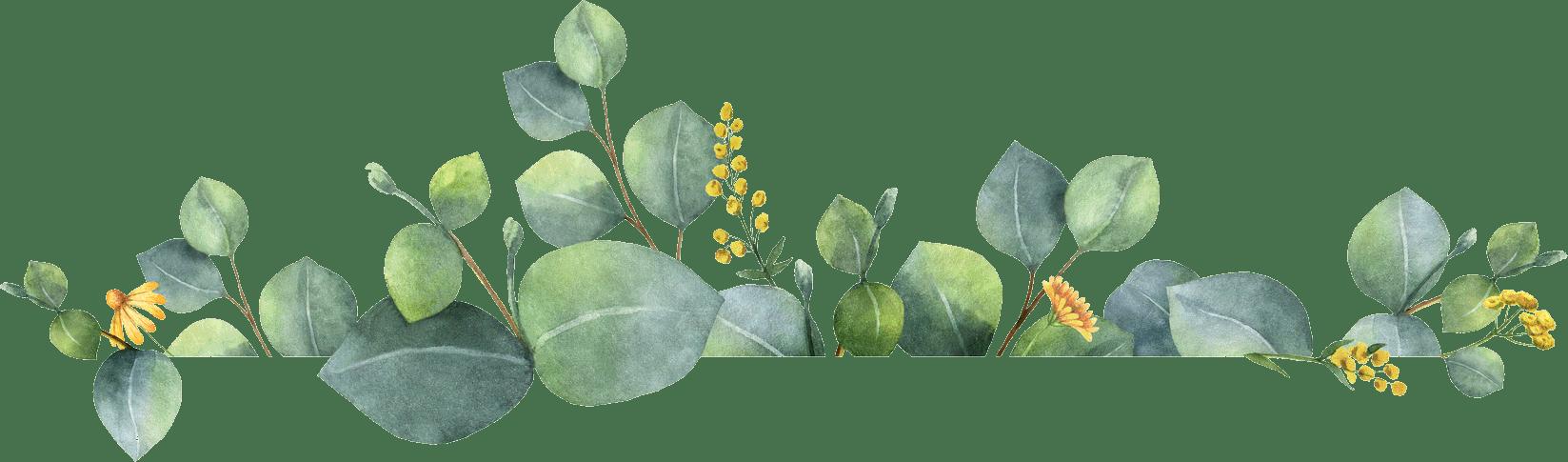 Terrestrial plant, Flower, Botany