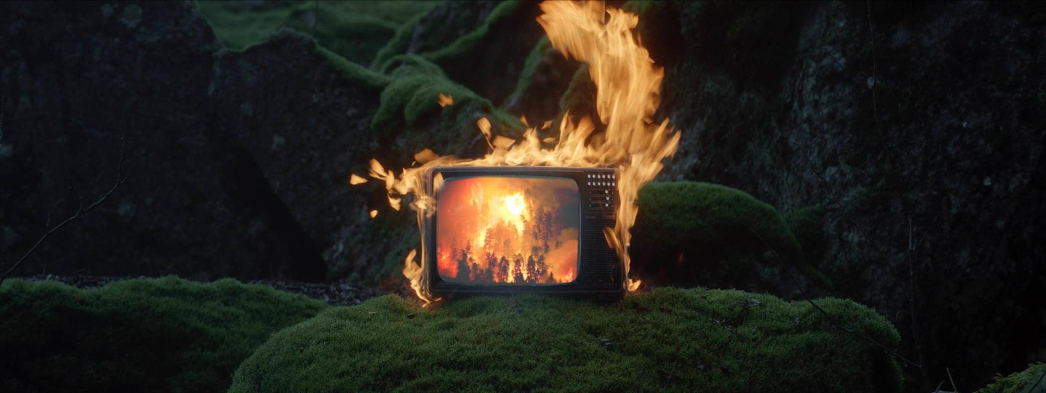 Plant, Bonfire, Fire, Campfire, Grass, Flame, Heat