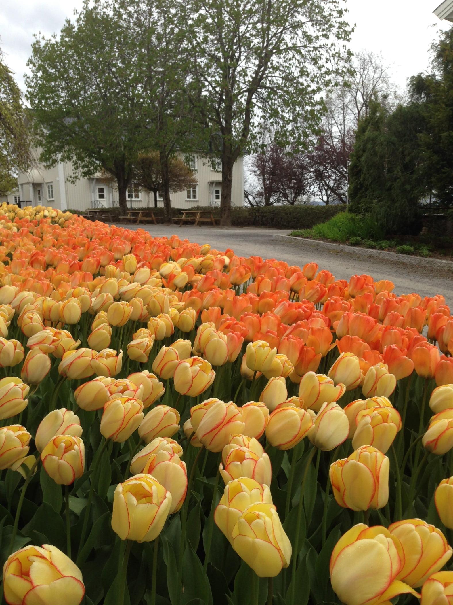 Natural environment, Botany, Orange, Garden, Leaf, Tree, Flower, Petal, Yellow, Plant