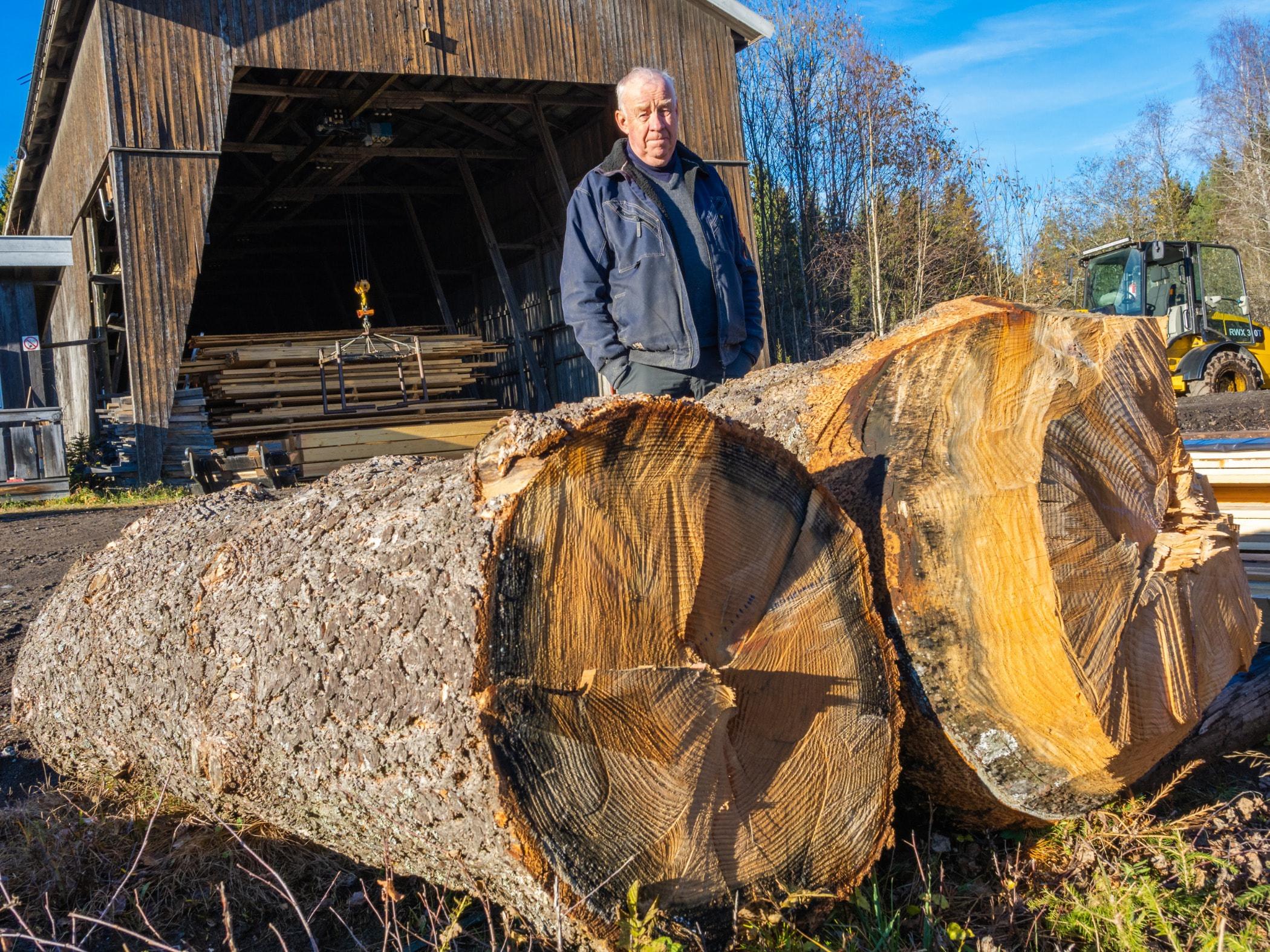 Tree stump, Lumber, Logging, Wood