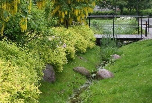Plant community, Garden, Groundcover, Bridge, Shrub, Vegetation