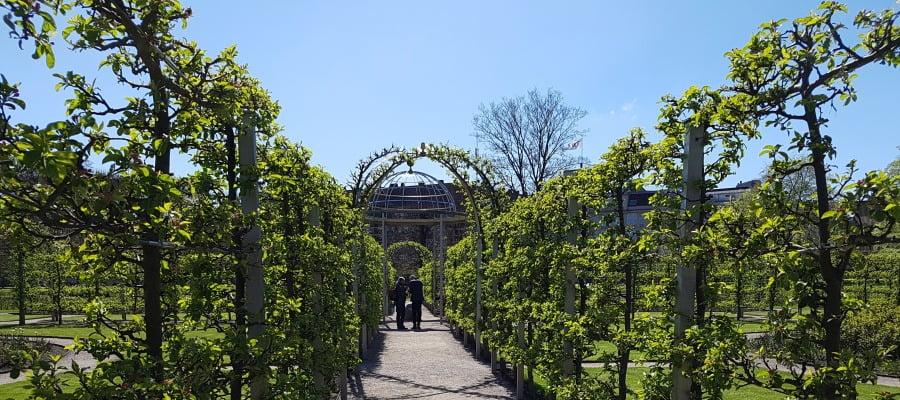 Hedge, Botany, Arch, Garden, Shrub