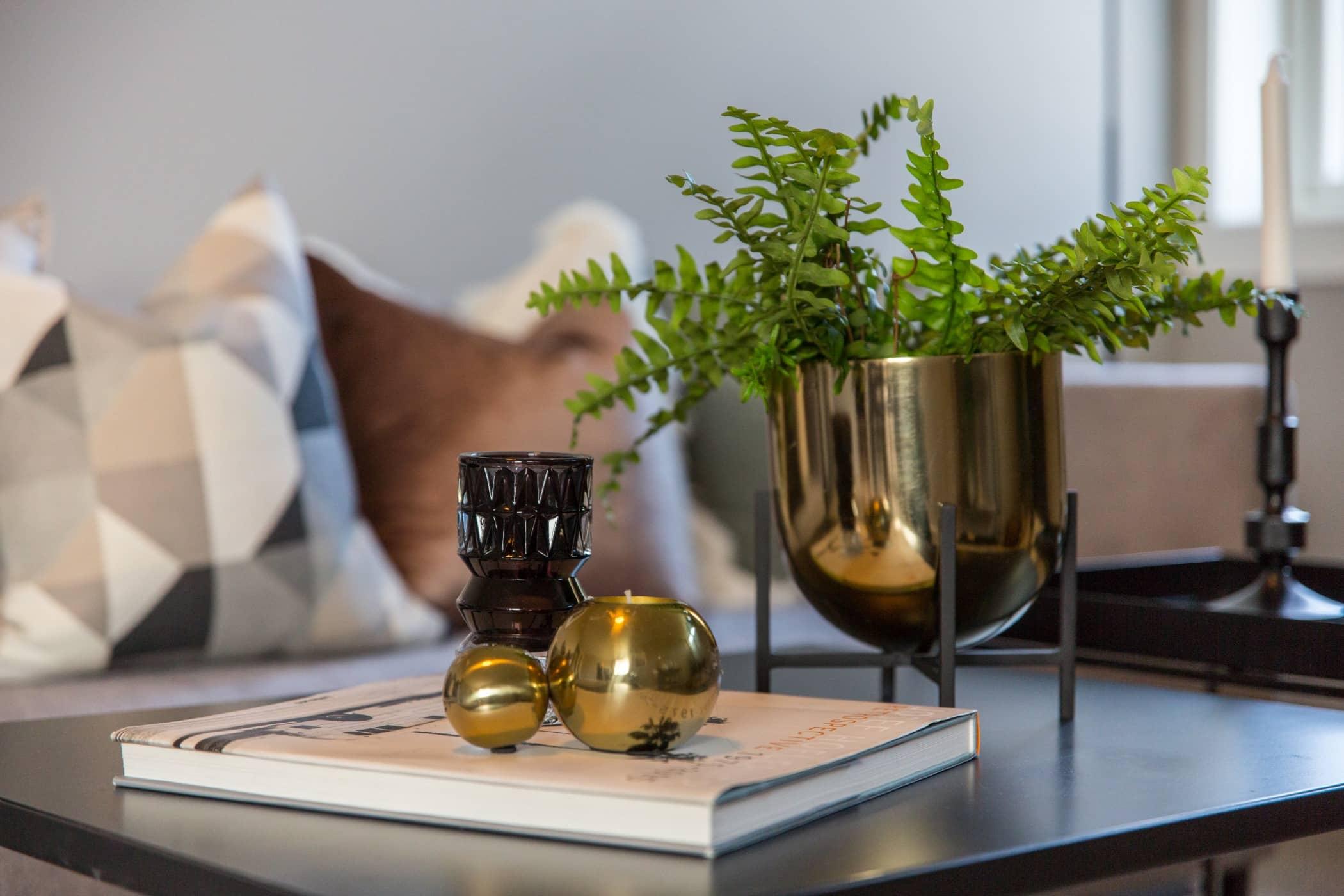 Interior design, Houseplant, Room, Table