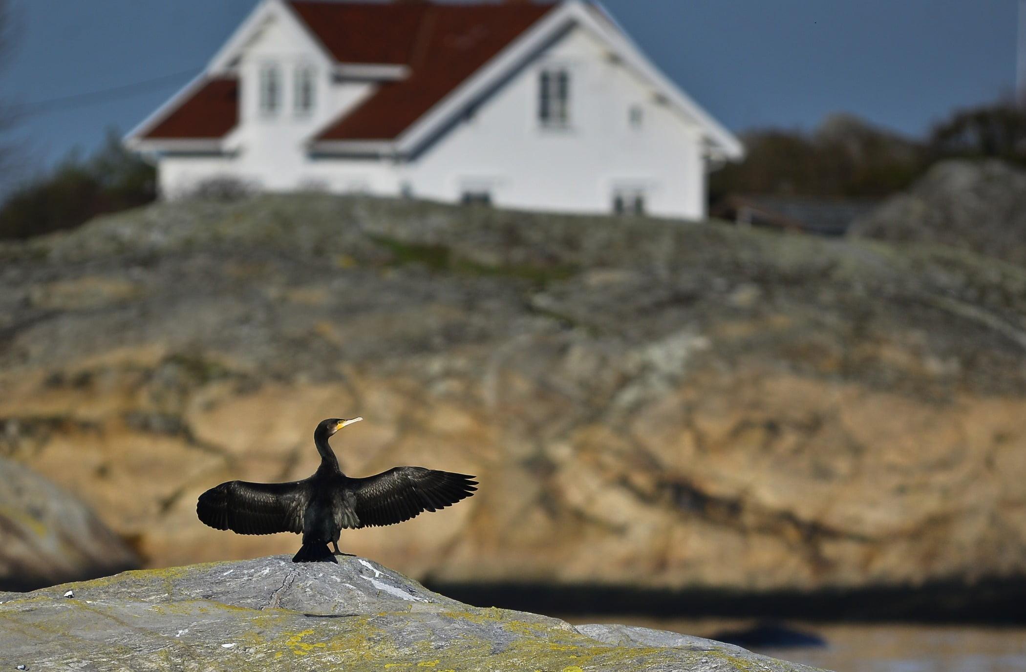 Bird, Beak, Cormorant, Sky, Wood, Water, Tree, Window, Building