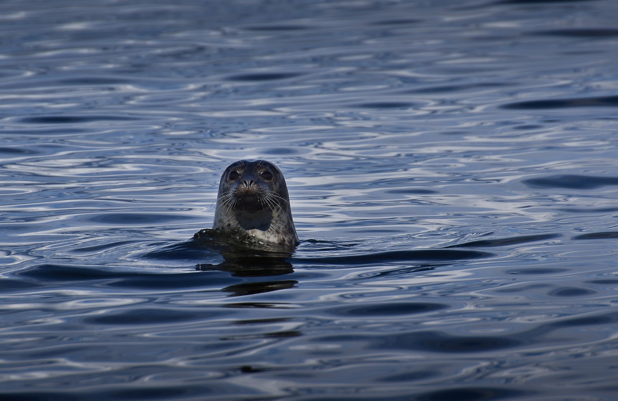 Water, Liquid, Fluid, Carnivore, Otter, Lake