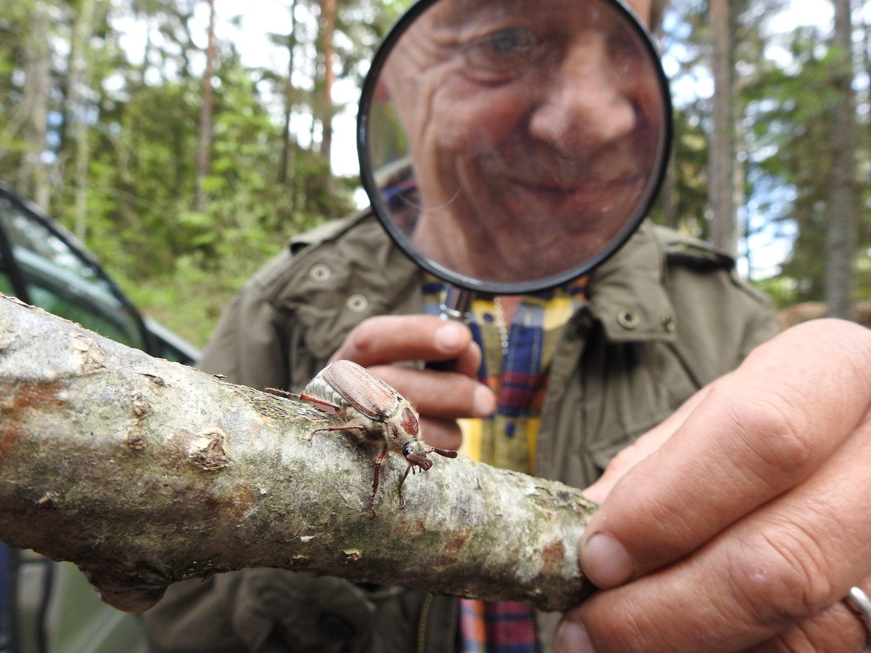 Terrestrial plant, Hand, Vertebrate, Tree, Wood, Finger, Smile